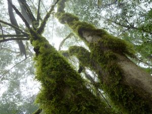 Im Nebelwald 2