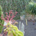 Im Garten bei Ruhe Pur